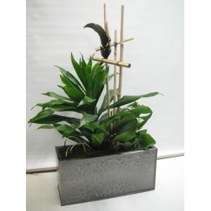 Montage de plantes vertes