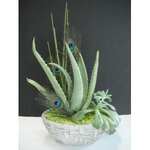 Montage de succulentes
