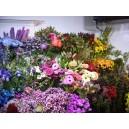 Notre vaste choix de fleurs fraîches